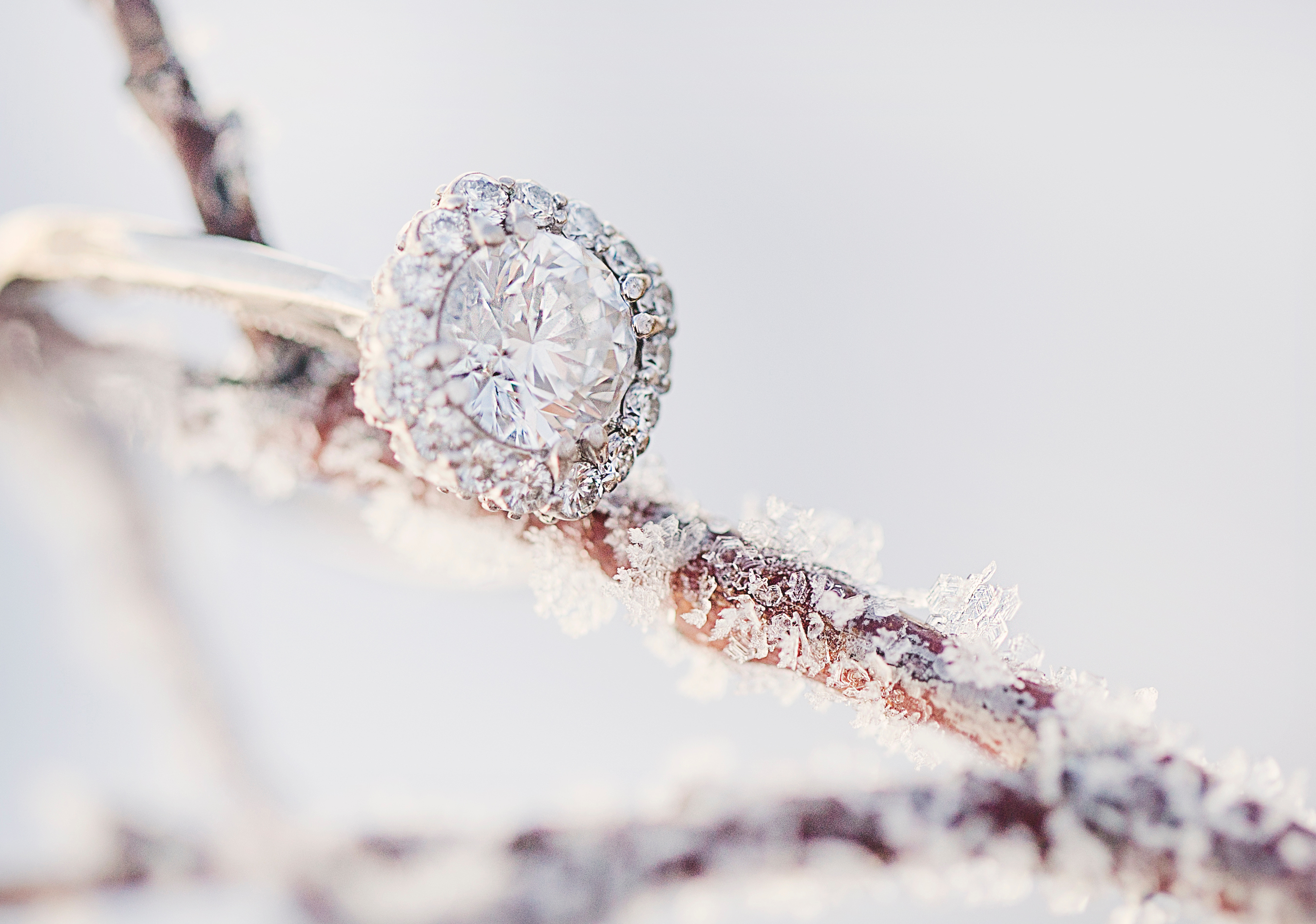 Canva - Diamond ring on frozen branch