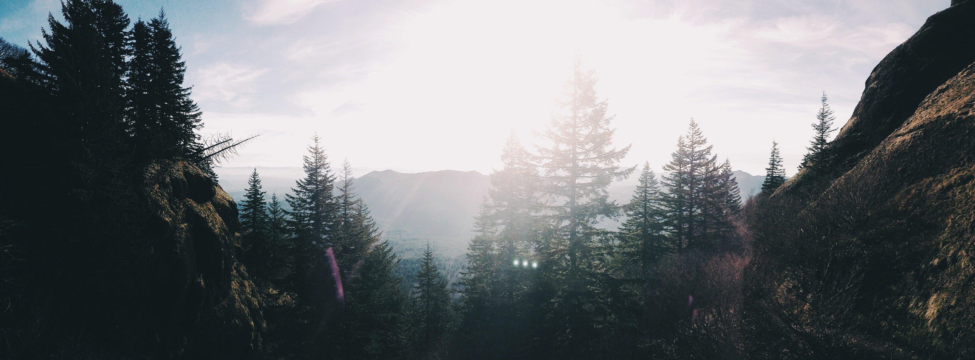 sunrays-behind-trees_t20_NV0Wjd