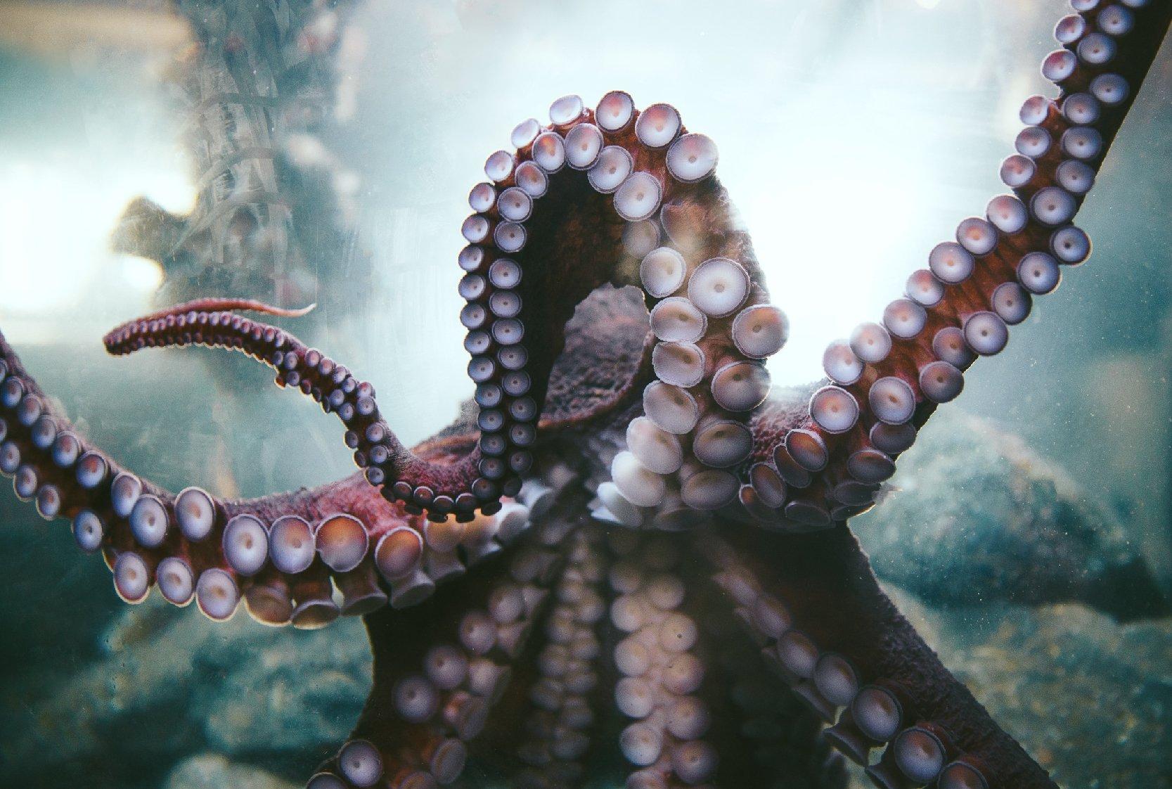 Marketing-Octopus-1-01-1
